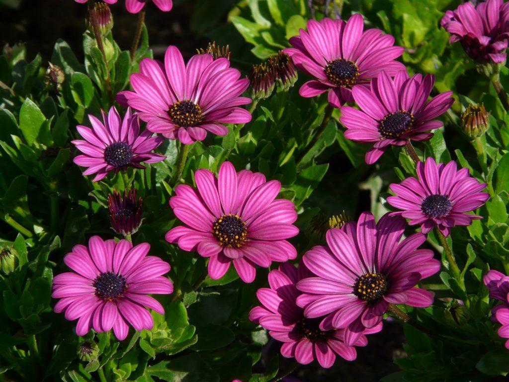 Рослини для ідеального палісадника гербара