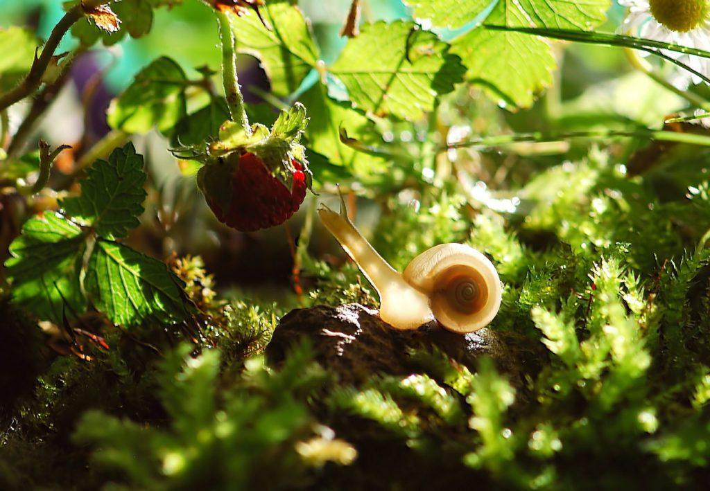 Шкідники у саду