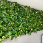 Найгарніші кімнатні рослини, що в'ються