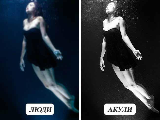 Як бачать підводний світ акули